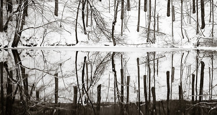 douglas-wood-winter-trees-snow-river-reflections-detail