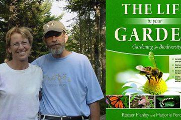 peronto-manley-the-life-in-your-garden